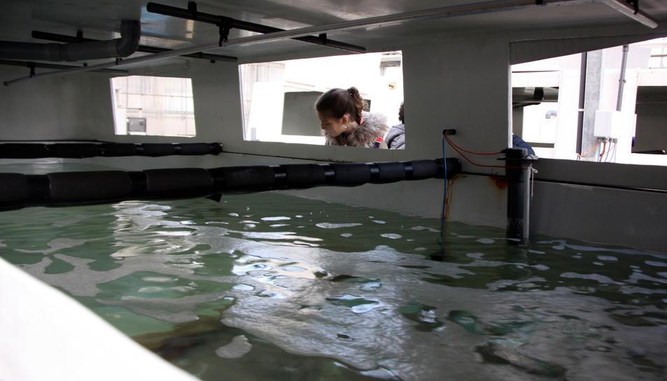 Un dels tancs a les instal·lacions de Sant Carles de la Ràpita.