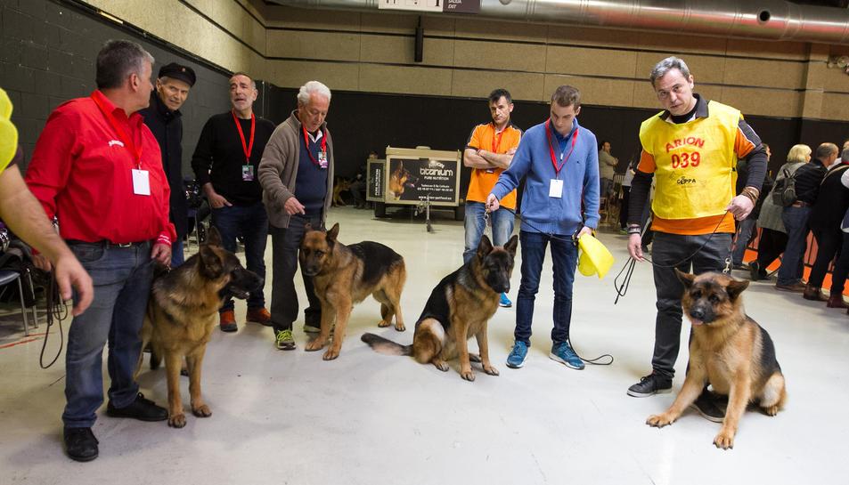 El monogràfic de Pastors Alemanys ha comptat amb una vuitantena de gossos