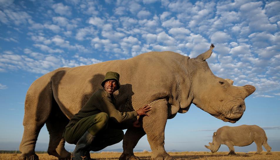 Imatge d'arxiu de Sudan a la reserva natural on vivía.