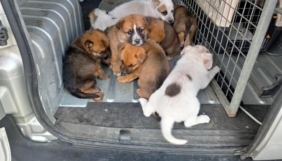 Els gossos van ser llançats en un carrer de la urbanització Calafell Park.