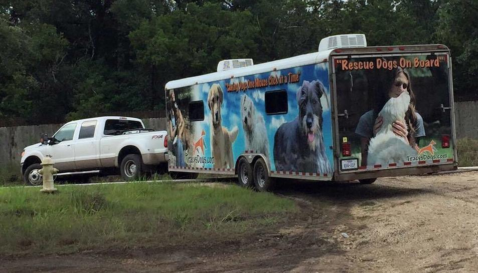 El bus on transporten els animals