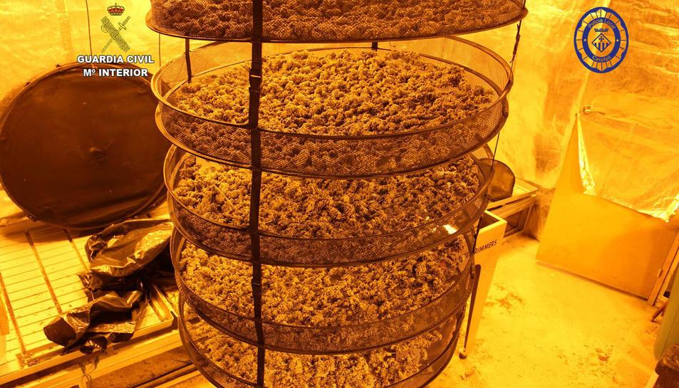 Es van interceptar 30 quilos decogollos de marihuana en unsecaderocondicionat en l'habitatge.