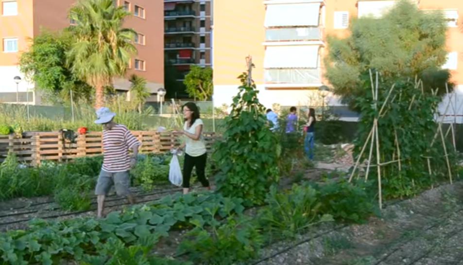 Imatge de l'Hort Social que hi havia al campus Catalunya fins a l'inici de les obres de la nova Facultat de Ciències de l'Educació i Psicologia.