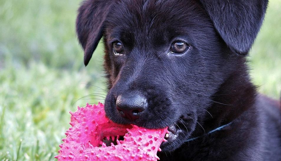 Té sentit parlar al nostre gos com si fos un nadó?