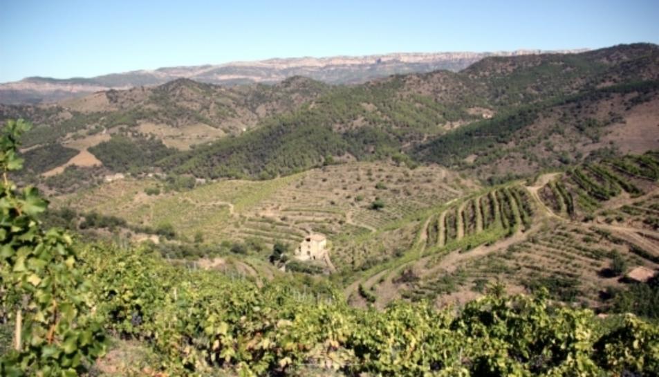 Imatge general de diverses vinyes al terme municipal de Porrera, al Priorat, amb la Serra de Montsant al fons, el 18 de setembre de 2015.