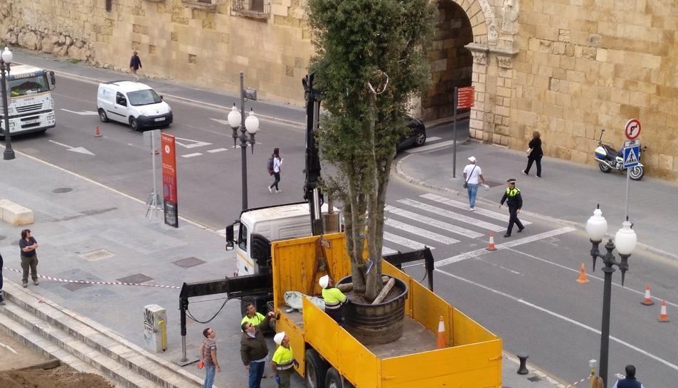 Operaris plantant l'alzina al passeig de Sant Antoni.