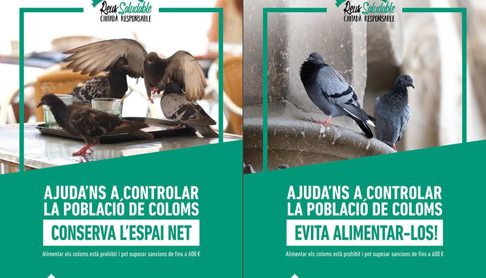 Cartells de la campanya per reduir el nombre de coloms a Reus.