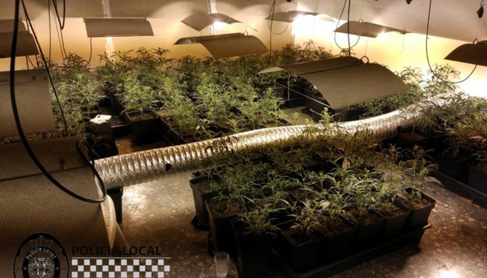 La Policia Local de Cambrils va localitzar una plantació de marihuana en una masia abandonada.