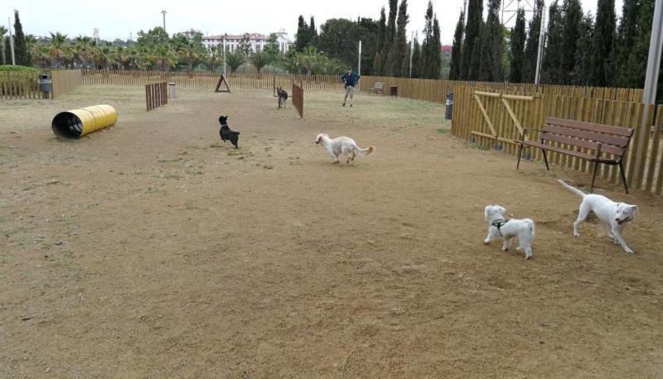Els gossos podran anar sense ser lligats