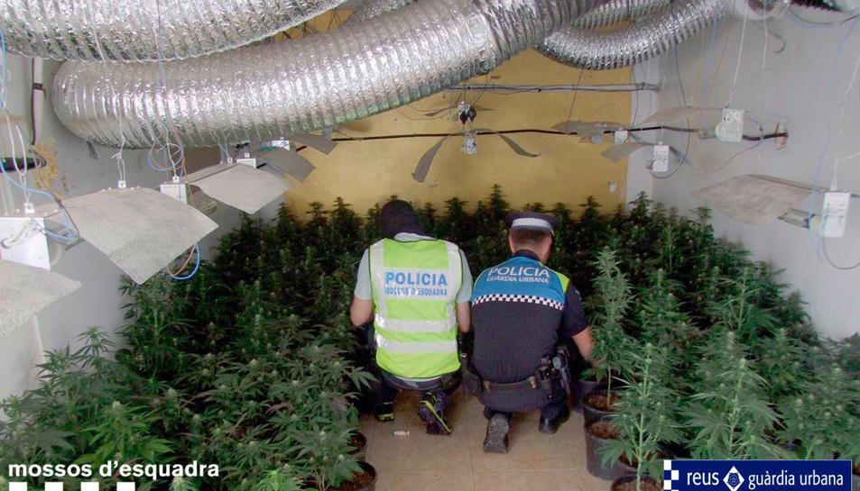 Pla obert d'un agents dels Mossos d'Esquadra i un de la Guàrdia Urbana de Reus, d'esquenes, observant la plantació de marihuana localitzada a Reus. Imatge publicada el 6 de juny del 2018
