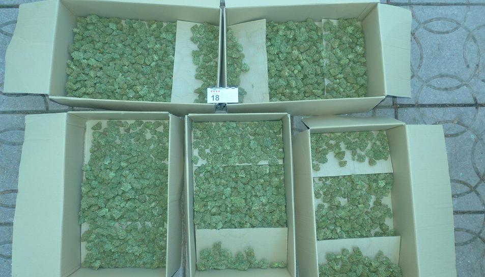 Els Mossos van intervenir més de 900 plantes i 36 quilos de cabdells de marihuana en dues cases d'Almoster i Mont-roig del Camp.