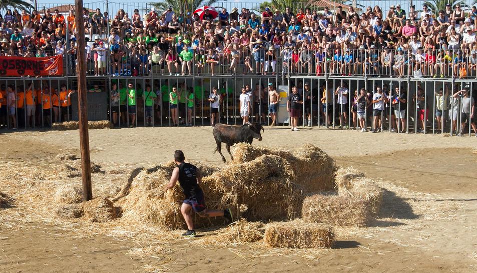 Els membres de les penyes intenten fer retallades o saltar per damunt dels animals.