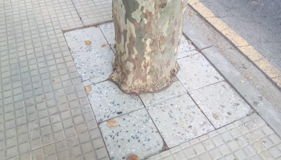 Imatge d'un dels arbres rodejat de llambordes.