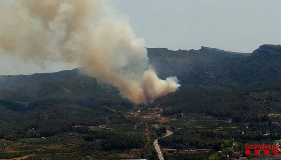 L'incendi forestal s'ha produït al costat de la C-44.