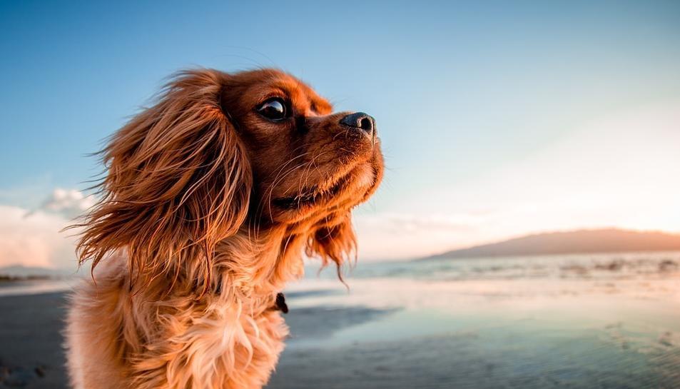 Cinc platges per anar amb el teu gos al Camp de Tarragona