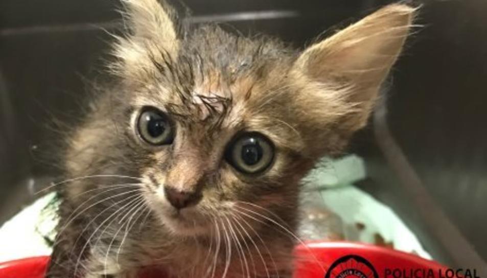 Imatge del gat petit rescatat de l'interior d'un vehicle.