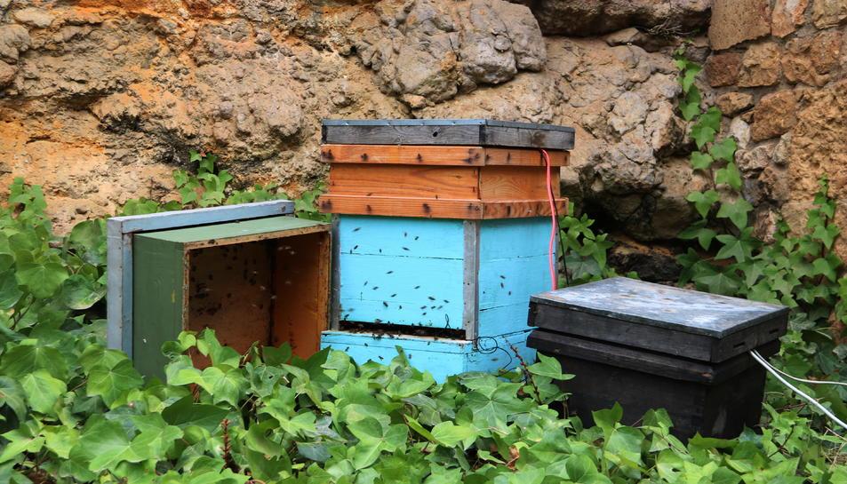 Una caixa amb abelles que forma part del projecte de la caixa de música instal·lada a Tarragona.