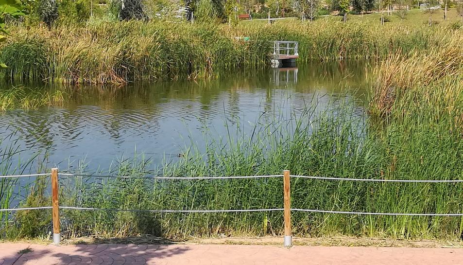Al centre de la imatge s'aprecia un ànec, parcialment ocult entre les herbes aquàtiques.