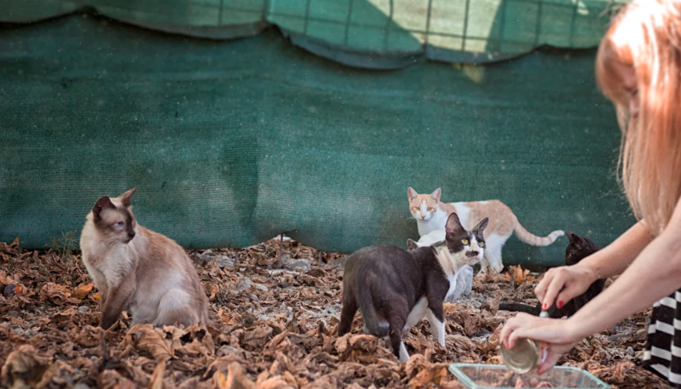 Imatge d'una colònia de gats urbans.
