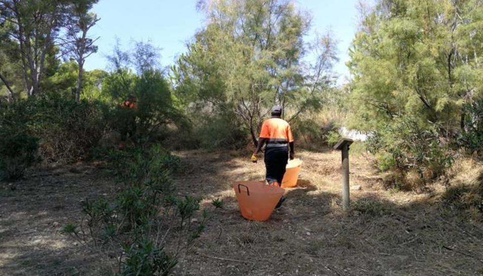 La brigada municipal i els treballadors del Pla d'Ocupació fan treballs de manteniment a Cap Salou.