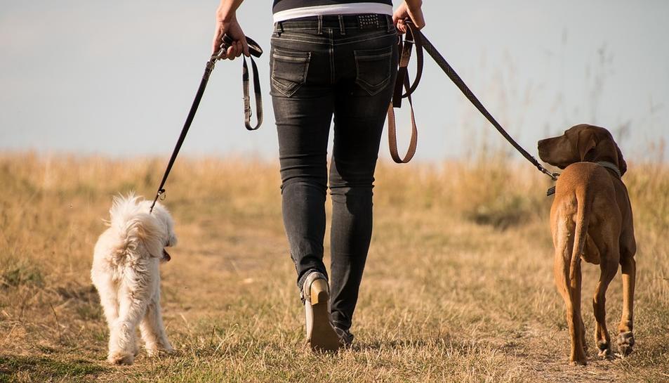 Imatge d'un propietari passejant amb els seus gossos.
