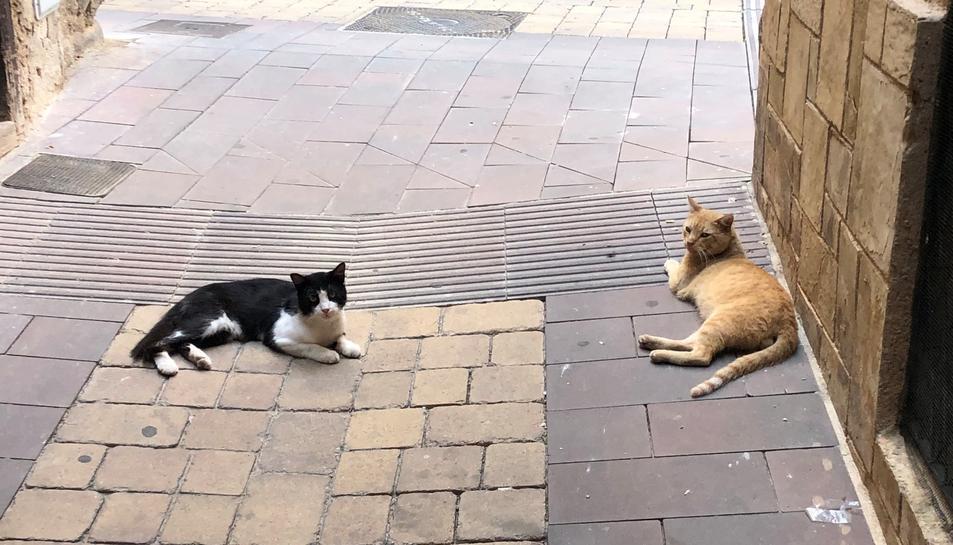 La campanya de control de les colònies de gats a la via pública es va iniciar al febrer.