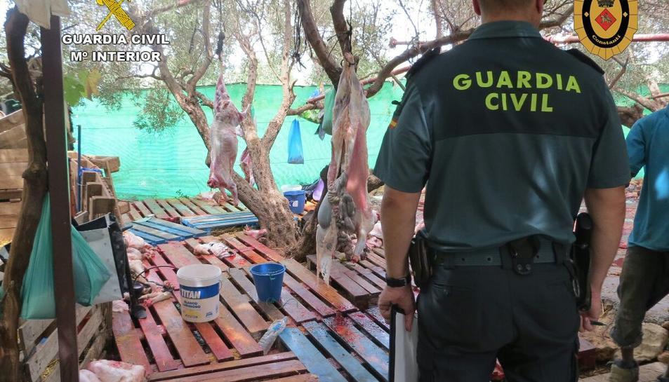Els responsables es dedicaven a sacrificar animals 200 euros per sacrificar els animals,