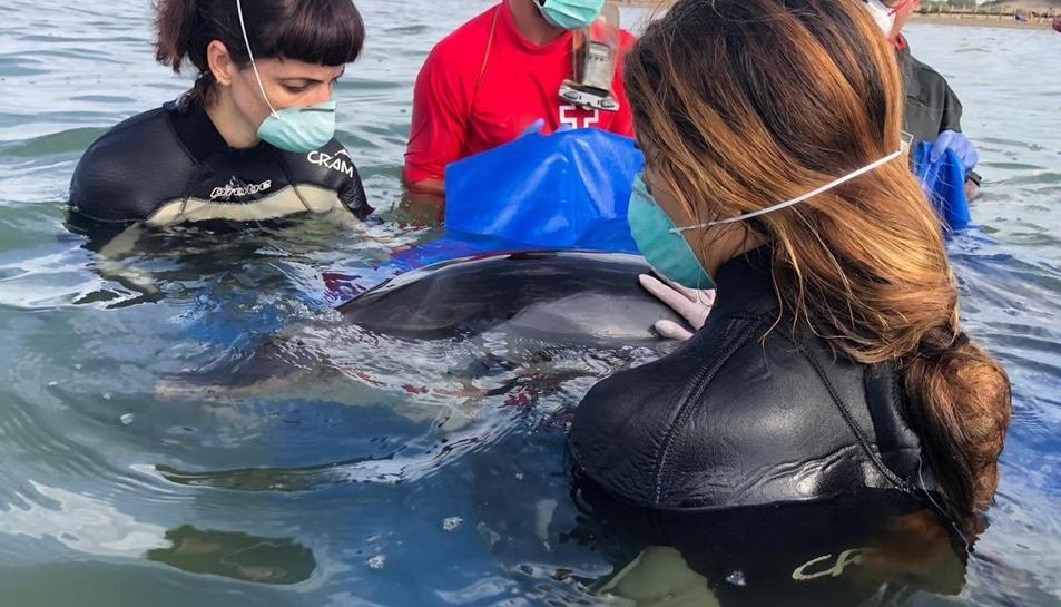 Agents Rurals, tècnics de la Creu Roja i del CRAM van assistir el dofí.