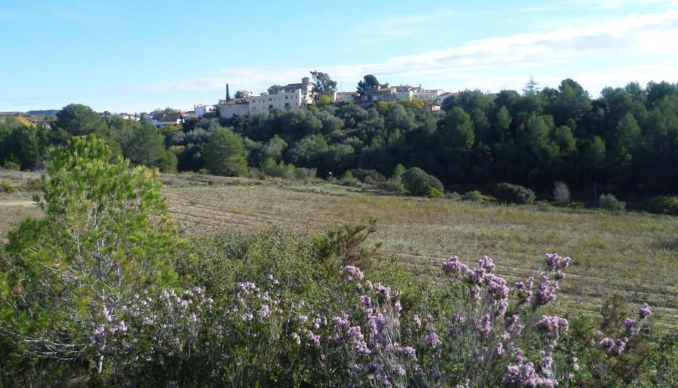 Una ruta circular que travessa el torrent de Renau