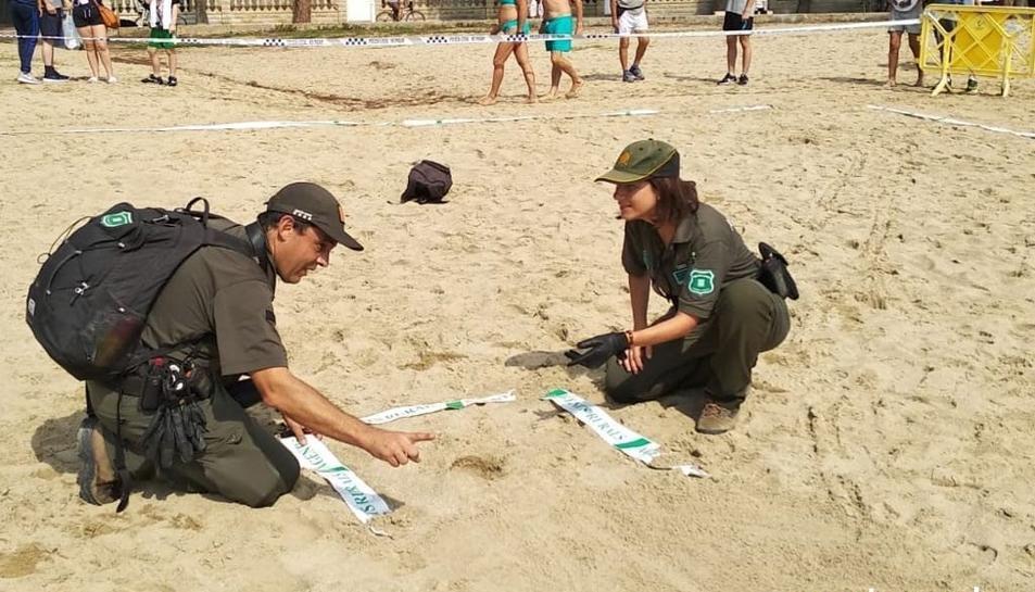 Els Agents Rurals protegint el niu de tortuga babaua