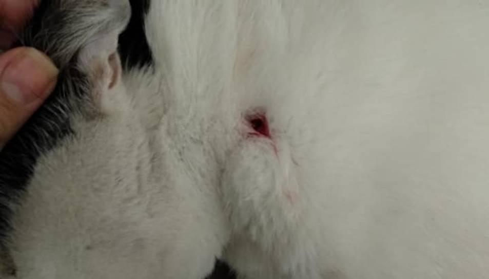El gat amb un ttre