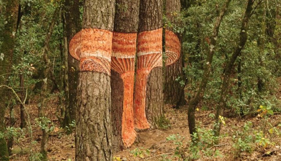 Bolets pintats als arbres al