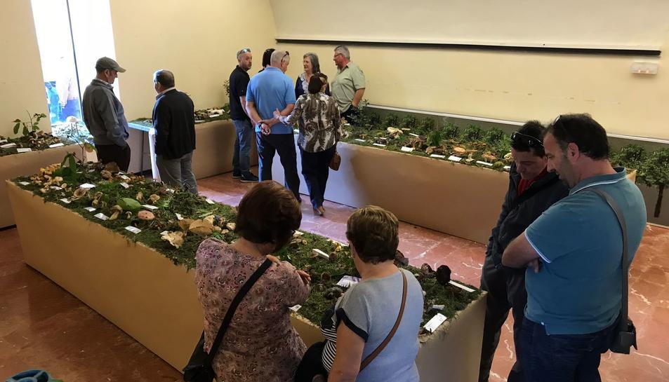 En la mostra s'hi van poder veure unes 200 espècies classificades, i més d'una vintena sense classificar.