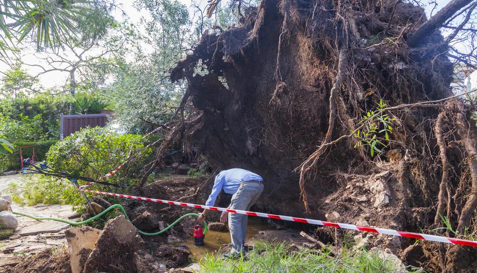 La forma amb què el vent va arrencar els arbres d'arrel fa pensar que va tractar-se d'un tornado.