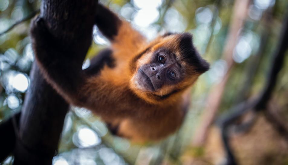 Una imatge de fauna salvatge captada pel fotògraf.