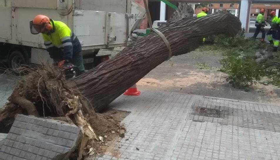 Els serveis de jardineria de Reus han tallat amb una motoserra el tronc de l'arbre.
