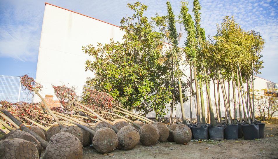 Es col·locaran 100 nous arbres als carrers de la ciutat.