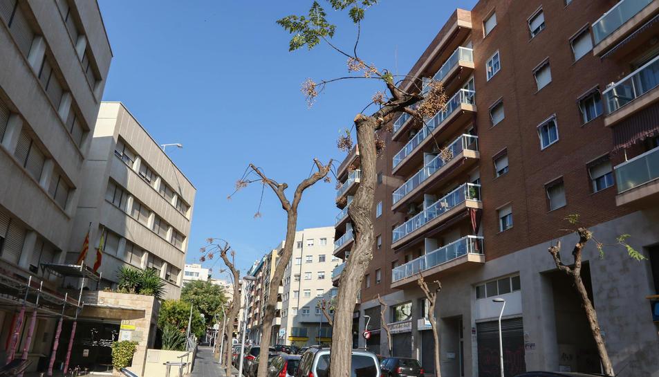 Arbres podats al carrer Francesc Bastos de Tarragona.
