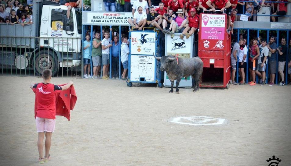 Imatge d'un acte taurí a les Festes Majors d'Amposta.