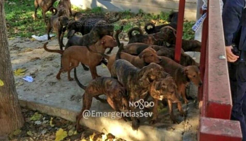Imatge dels gossos difosa per Emergencias Sevilla.