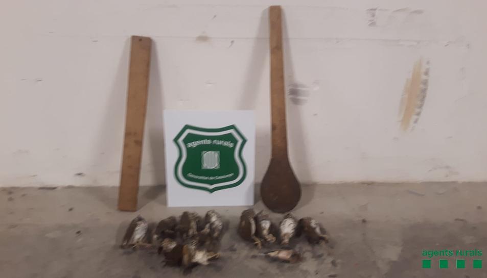Els Agents Rurals van intervenir els estris utilitzats per caçar i una desena d'ocells morts.