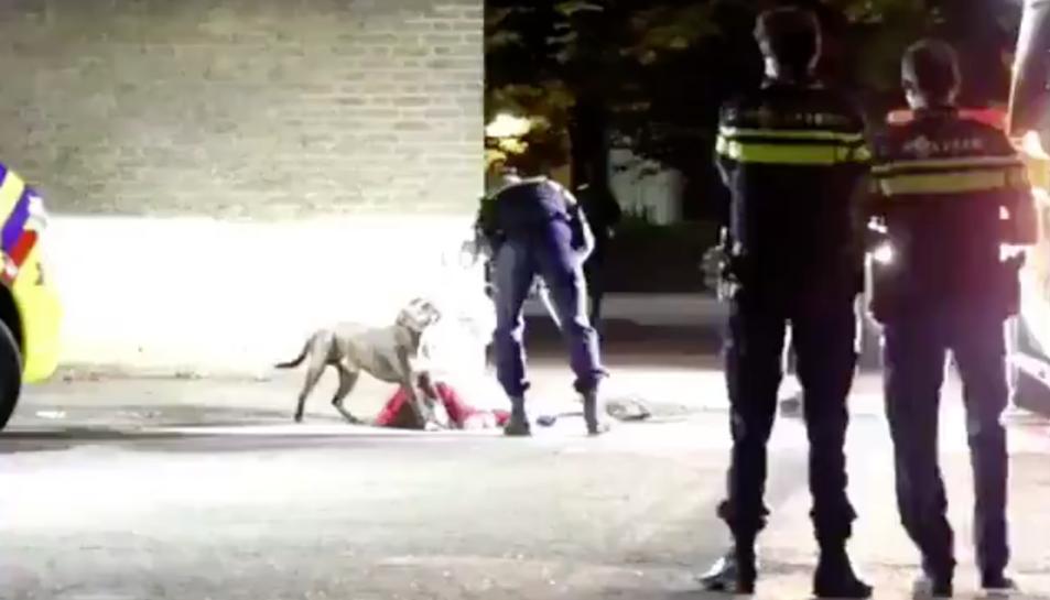 Imatge dels agents controlant l'animal.