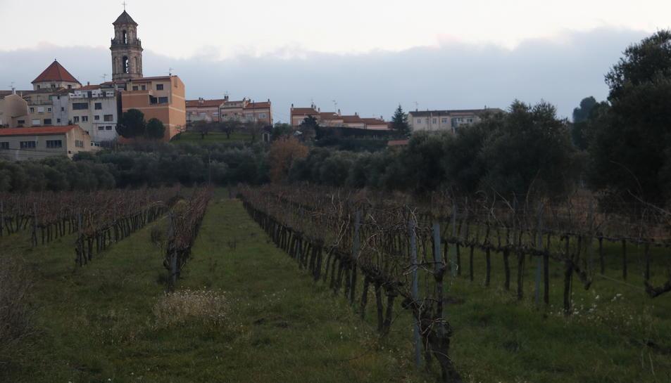 Imatge d'unes vinyes als peus de Falset, al Priorat.