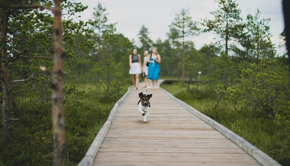 Imatge d'un gos fent turisme amb la seva família.