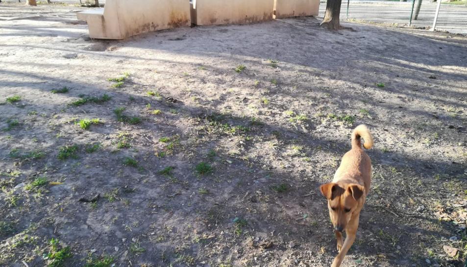 Una gossa, al pipicà del Parc de la Quinta de Sant Rafael.