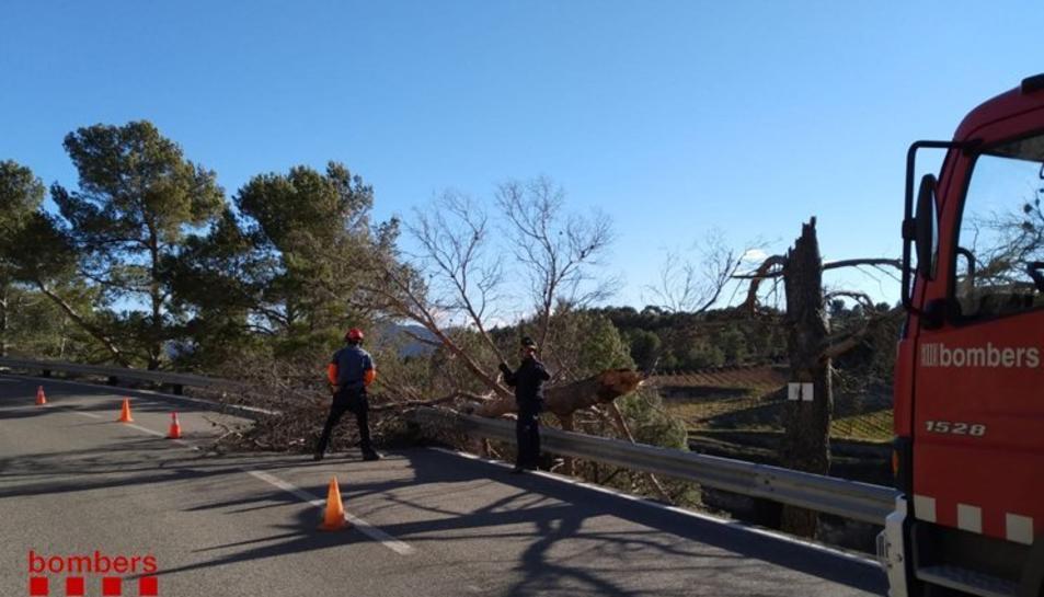 Un arbre caigut a la TV-7021 a Cornudella de Montsant.