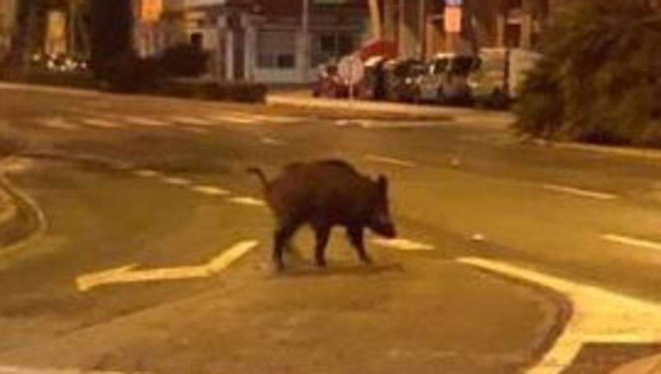 Imatge del porc senglar pels carrers de Reus, aquest dimart a la nit.
