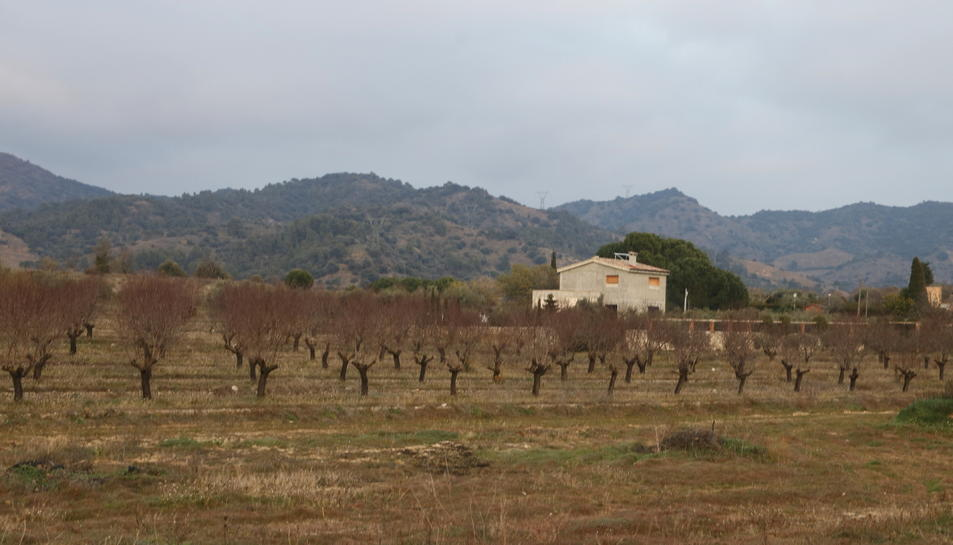 Diverses vinyes al Priorat.