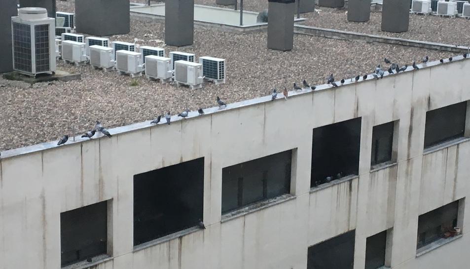 Gran quantitat de coloms en un dels edificis de la zona on la seva presència és problemàtica.