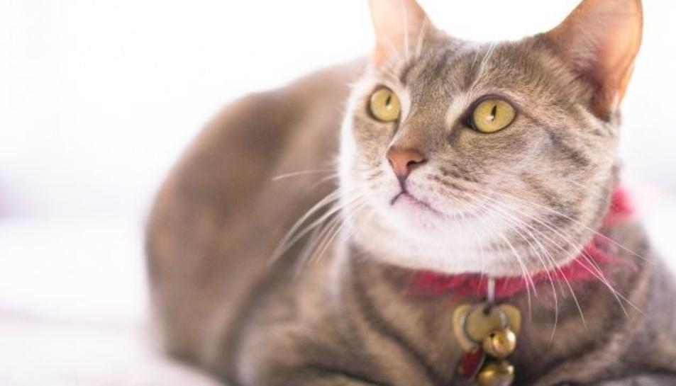 Per què és millor no posar un cascabell al gat?